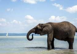 Elefántfürdetés a Cirkuszok Éjszakáján