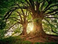 Madarak és fák napja - Online erdeiiskola-sorozat indul