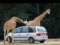 Autós szafari park nyílik Szadán